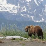 Bear Viewing Alaska